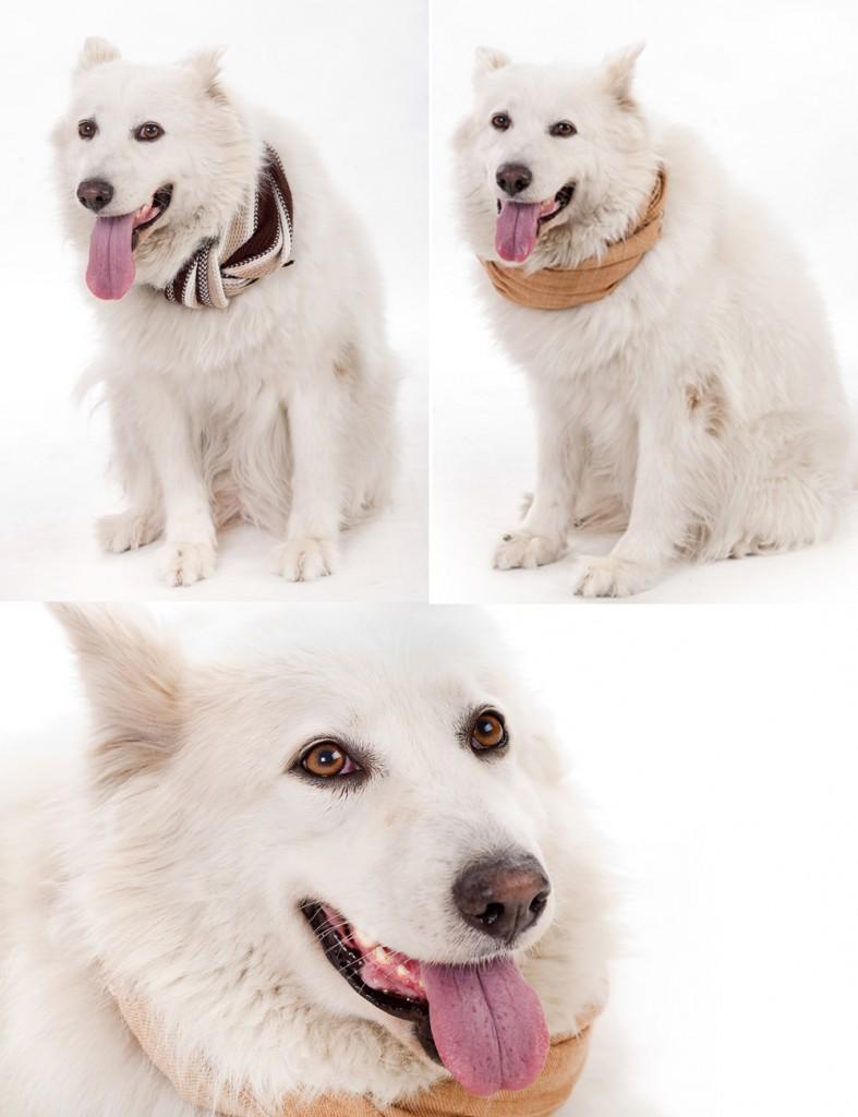 scarf dog
