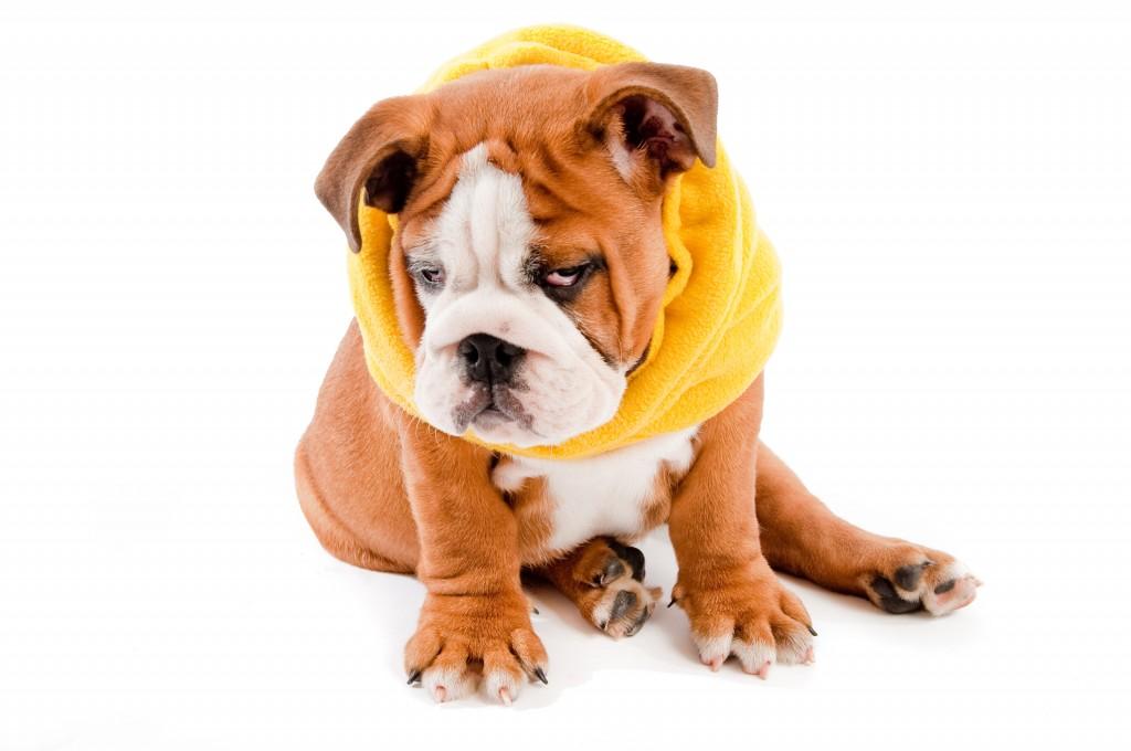 saddest dog